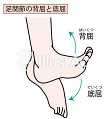 足首の動きの図