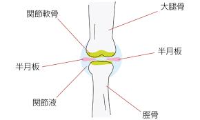 膝関節の図